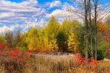 Autumn Landscape 17721
