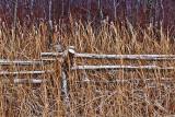 Snowy Rail Fence 19153