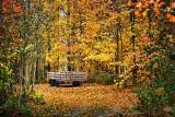 Wagon In The Woods DSCF02552