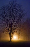Foggy Lockstation Trees 20111214