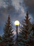 Enlightened Pines DSCF03605