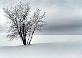 Frozen Ottawa River DSCF03925