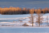 Winter Fields At Sunrise 20120207