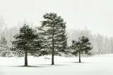 Three Pines 20120215