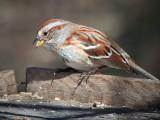 Sparrow On A Box 26285