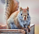 Hey Dude, Got Any Nuts? 26493