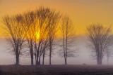 Foggy Sunrise 22576