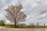 Corner Tree 20120508
