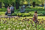 Tulip Festival 2012 (00456)