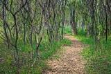 Bill Holland Nature Trail 00382
