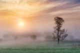 Lone Tree In Foggy Sunrise 23801