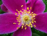 Purple Flower 00590