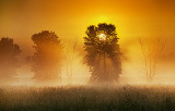 Trees In Misty Sunrise 20120619