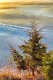 Otter Lake Pine 23159
