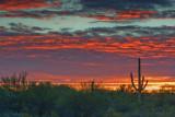 Desert Sunrise 78061