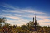 Moonlit Desert 78155