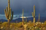 Desert Storm 76770
