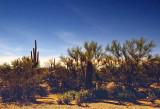 Moonlit Desert 78152