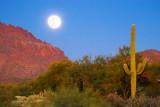 Desert Moonrise 78254