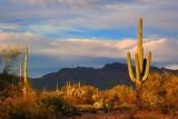 Desert At Sunset 77381