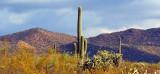 Desert Panorama 78123-5