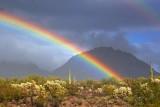 Desert Rainbow 76809