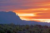Desert Sunrise 78511