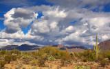 Desert Scene 78134