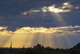 Desert Sunrays 80802