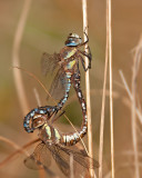 damsel_and_dragonflies_2011
