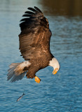 End of march eagles -0450.jpg
