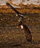 End of march eagles -0509.jpg
