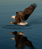 End of march eagles -0484.jpg