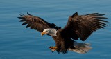 End of march eagles -0709.jpg