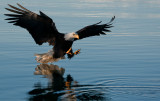 End of march eagles -0537.jpg