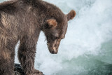 bears_of_sweetheart_creek