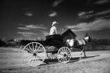 Little Buckboard