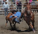 Steer Wrestling 3
