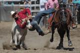 Steer Wrestling 1 (Loose)