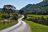 The Backroads of Sonoma