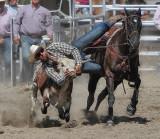 Steer Wrestling 5