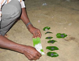 Kani shaman. A banana leaf with ashes and 7 leaves with 1 rupee 25 paise each are needed for the ceremony. Tirunelveli District.