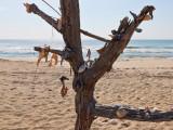 assateague beach tree.jpg
