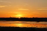 golden evening on assateague island
