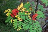 cranberry wilderness, september 2011