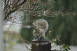 Rainy Day Squirrel