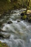 The rushing Stevens Creek