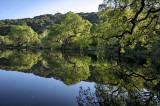 Picchetti Pond