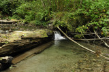 Redwood Waterfall