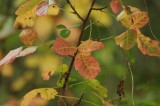 Turning Poison Oak